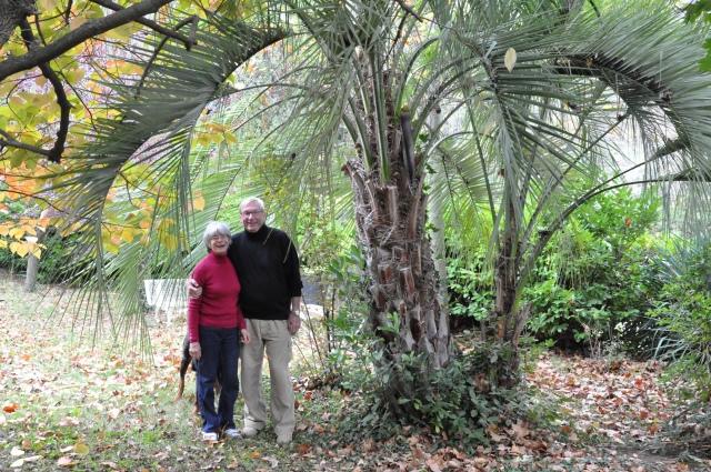 """Catherine et Jean Marin """"sous"""" le palmier qui n'avait que quelques centimètres lorsque Frédéric Dumas le leur offrit.  Photo Franck Machu 2012."""