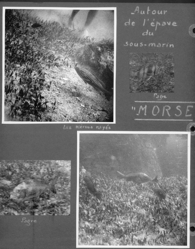 Album photos de Guy de Frondeville. Coll. Part. Tous droits réservés.