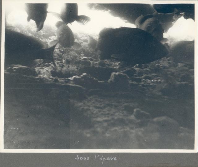 Album photos de Guy de Frondeville. Sous l'épave du Morse. Coll. part. Tous droits réservés.